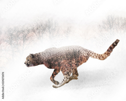 double-exposure-of-running-cheetah-and-trees