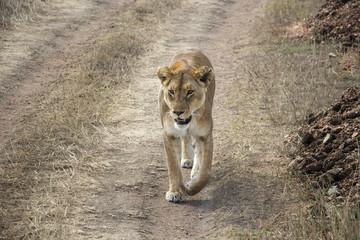 Mama Simba is walking