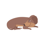 Purebred brown dachshund dog lying on the floor vector Illustration on a white background