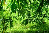 Bamboo tree with grass in sun light natural background