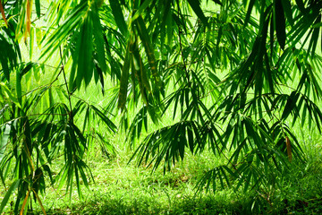 Bamboo tree with grass in sun light natural background © หอมกลิ่น กล้วยไม้