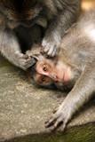 Family of monkeys - 224348630