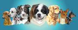 Big and small dog breeds panorama