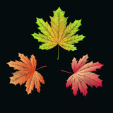 Embroidered maple leaves on black background. Autumn concept. Vector illustration.