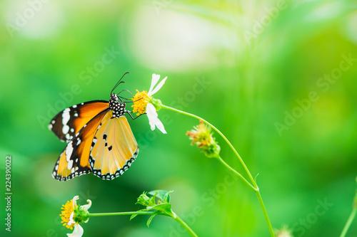 Leinwandbild Motiv Closeup butterfly on nature flower with copy space