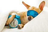 dog  sleeping or dreaming in bed