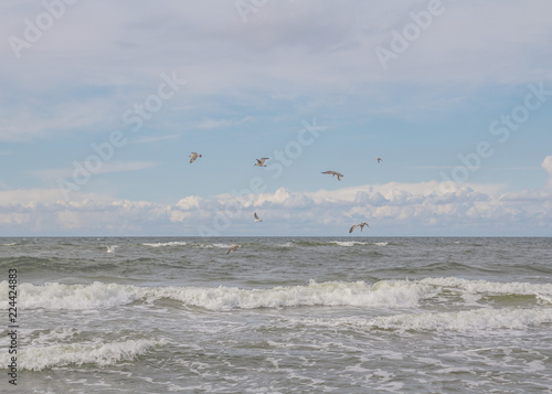 Ptaki i morze