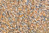 Background of small multicolored seashells - 224430292