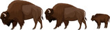 vector family of brown zubr buffalo bisons with kid - 224436468