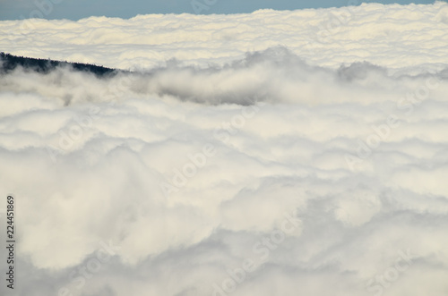 High Clouds over Pine Cone Trees Forest - 224451869