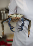blue crab on wooden plate - 224474059