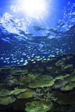 慶良間諸島の珊瑚礁