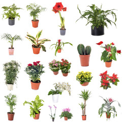 group of house plants
