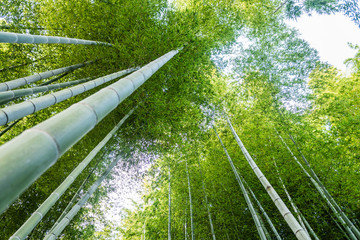 Bamboo forest in kyoto, Japan © jon_chica