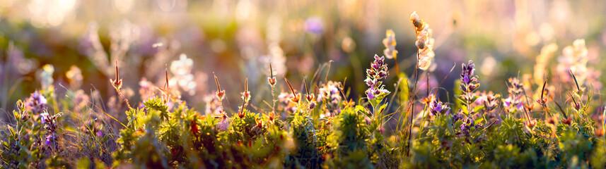 wild flowers and grass closeup, horizontal panorama photo © tankist276