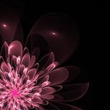 Beautiful pink flower in fractal design. Artwork for creative design, art and entertainment. - 224546060