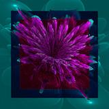 Abstract flower dark green  shades on a dark green  background . Artwork for creative design, art and entertainment. - 224546226