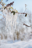icicles on a branch on a sunny winter day, blurry landscape background with copy space, vertical - 224566857