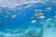 Leinwandbild Motiv Fish swim in school in mexico