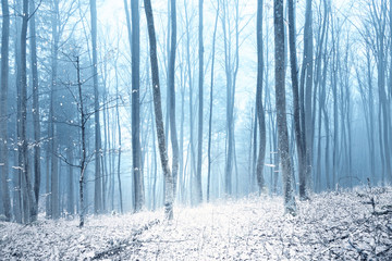 Magic foggy winter day in snowy forest during snowfall. © robsonphoto