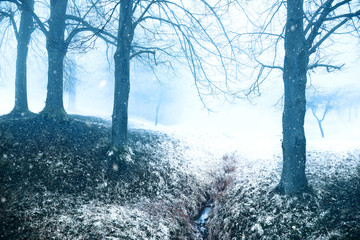 Winter foggy countryside field with trees during snowfall. © robsonphoto