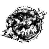 Hand drawn sun - 224616214