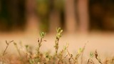 Blades of grass, blowing in the wind in front of a beach in slow motion - 224624092