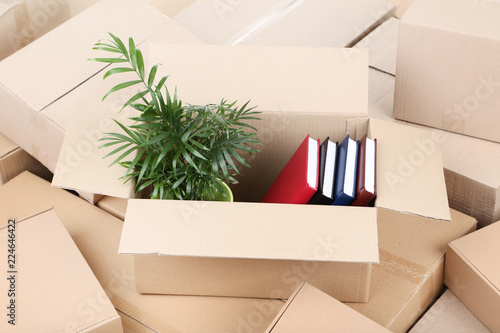 Cardboard boxes with green plant and books