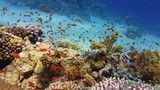Beautiful coral reef, colorful underwater scenery