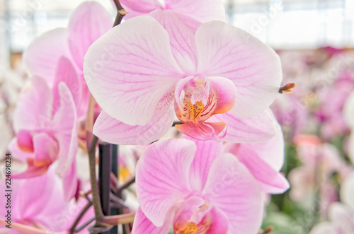 Beautiful orchids on sale in store