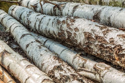 Timmerhög med stockar av björk - 224700863