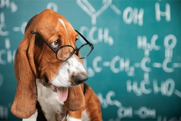 Math dog crazy glasses academic animal blackboard © BillionPhotos.com