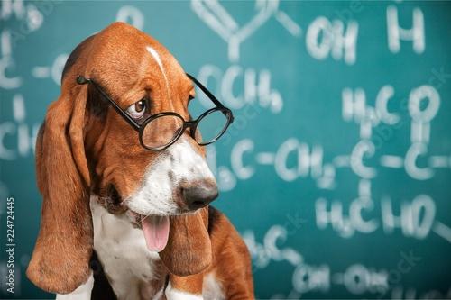 Math dog crazy glasses academic animal blackboard - 224724445