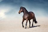 Ogier w ruchu w pustynnym pyle przeciwko pięknemu niebu