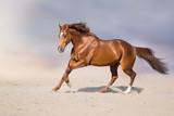 Red stallion in motion in desert dust against beautiful sky - 224754480