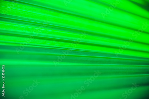 Close up palm leaf texture. Abstract tropical background. - 224769002