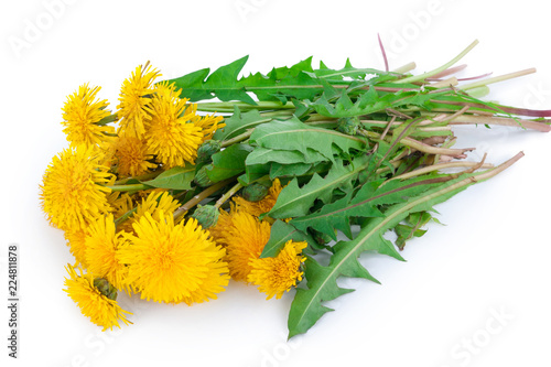 Dandelions on white background