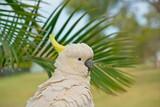 Sulphur crested cockatoo with damaged beak
