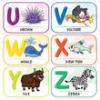 Animal Alphabet U V W X Y Z - 224841643