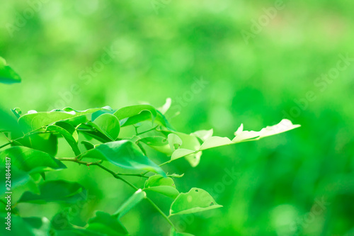 Blur of Tree Leaves for art background and colorful Abstract for festival holiday ,soft  made with gradient and filter colored. - 224844817