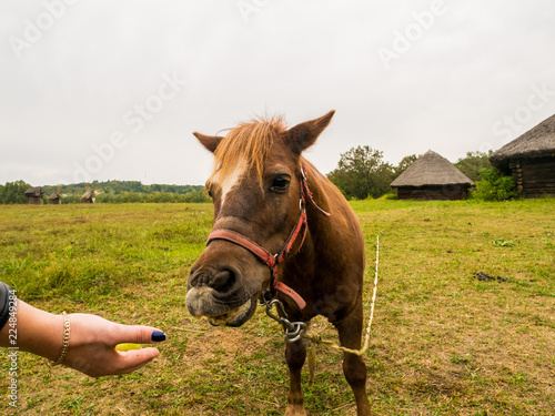 A man feeds a horse from his hand.