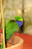 Rainbow parrot in zoo