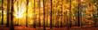 Leinwandbild Motiv Wald Panorama mit Sonne im Herbst, stimmungsvolles Licht