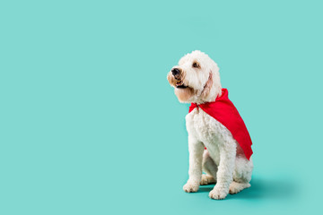 Dog wearing superhero cape on isolated background © MeganBetteridge