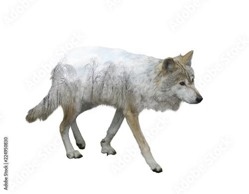 Fototapeta wolf double exposure