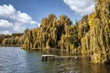 Yellow willows and blue sky on a river bay - 224979488