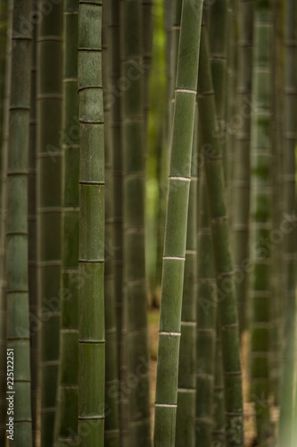 green bamboo forest inside park