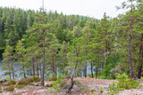 Old forest with rocks and lake in the wild landscape