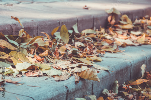 Lleaves on the steps of the park - 225143823