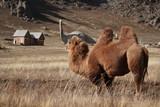 mongolia, terelji, national park, landscape, mountain, camel, dinosaur